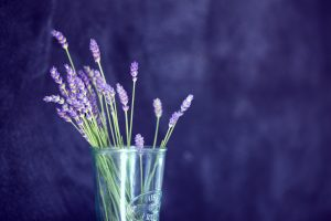 Jersey Lavender